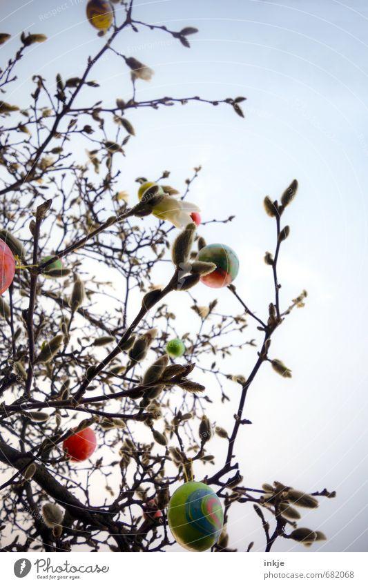 Magnolienosterbusch Himmel Natur schön Baum dunkel Gefühle Frühling Freizeit & Hobby Lifestyle Dekoration & Verzierung Kitsch Ostern hängen Handel Tradition
