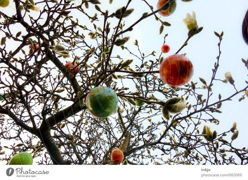Magnolienosterbusch Himmel Natur schön Baum Gefühle Frühling Stil Freizeit & Hobby Lifestyle Sträucher Dekoration & Verzierung hoch rund Ostern hängen Handel