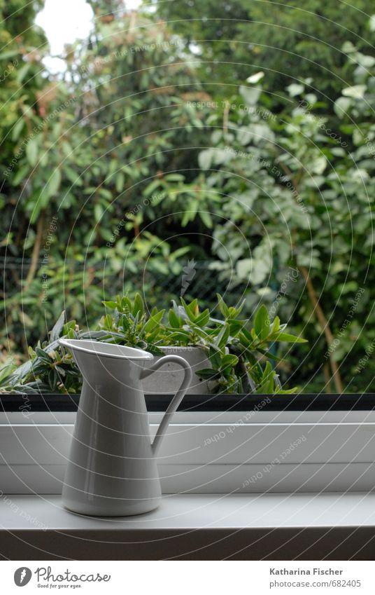 Zimmer mit Aussicht Natur grün weiß Pflanze Baum schwarz Frühling Autofenster Garten Park Sträucher Wachstum Vase Blumentopf Grünpflanze
