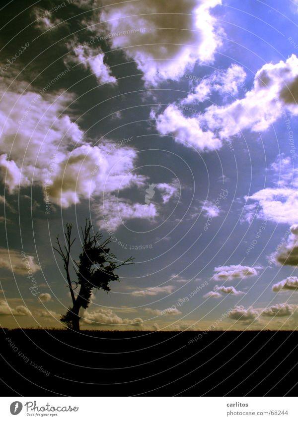 Ich kann diese stimmungsvollen Himmel bald wirklich ...... Himmel Baum Wolken dunkel Tod Traurigkeit Trauer Symbiose