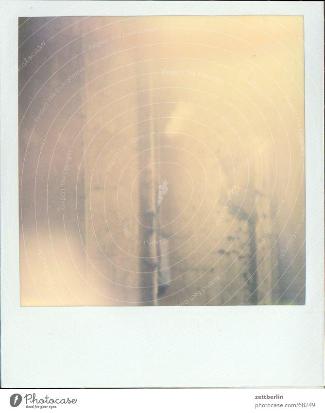 Polaroid XIII Nebel Rost Putz schlechtes Wetter Diesel Regenrinne Schliere
