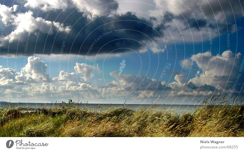 Schnell weg bevor es regnet Wasser Himmel Meer blau Strand Wolken Gras Regen Horizont Segeln Stranddüne