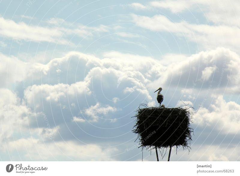 Fernweh Himmel weiß blau ruhig Wolken Tier Ferne Vogel frei Sehnsucht Abenddämmerung Nest Nachkommen friedlich Storch Horst
