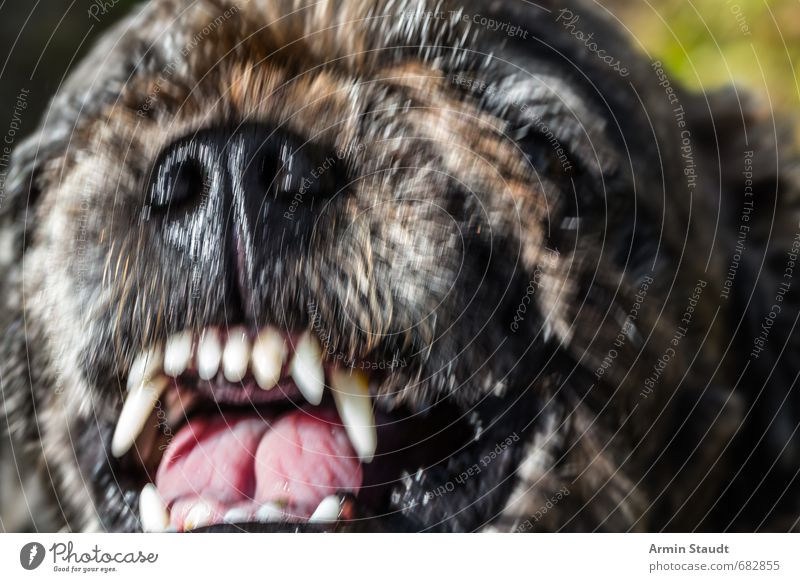 Ottos Mops spielt nur Tier Haustier Hund 1 Aggression bedrohlich Ekel gruselig hässlich braun Gefühle Angst Todesangst dumm ignorant Wut Gewalt Hass Abenteuer
