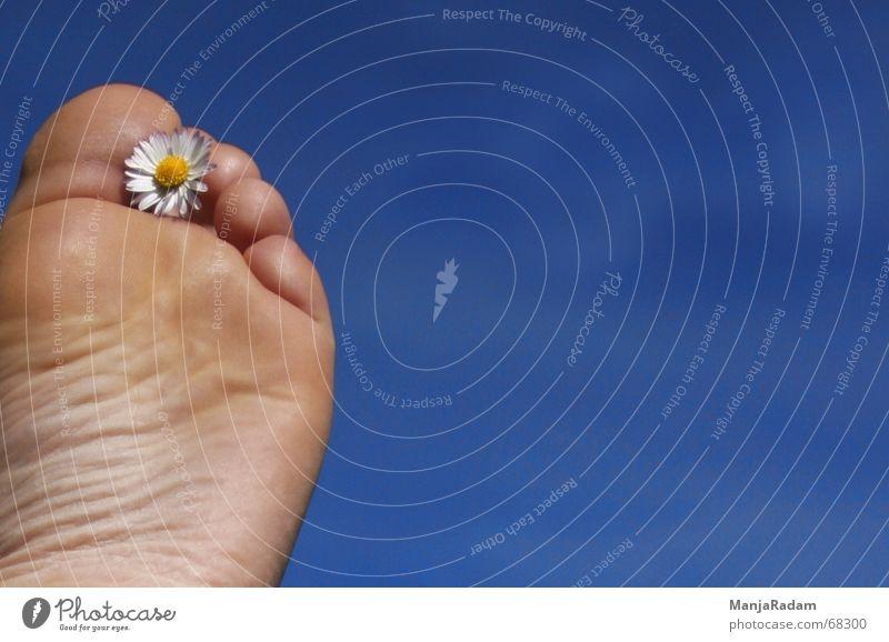 alle Fünfe gerade sein lassen ... Himmel blau Ferne Fuß Schönes Wetter Gänseblümchen Zehen Unbekümmertheit Mensch Schuhsohle