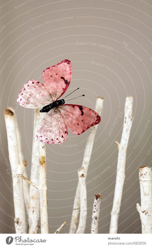 Springtime Natur Tier Frühling Sommer Schmetterling 1 Stimmung Ast Dekoration & Verzierung rosa sommerlich grau Farbfoto Innenaufnahme Tag