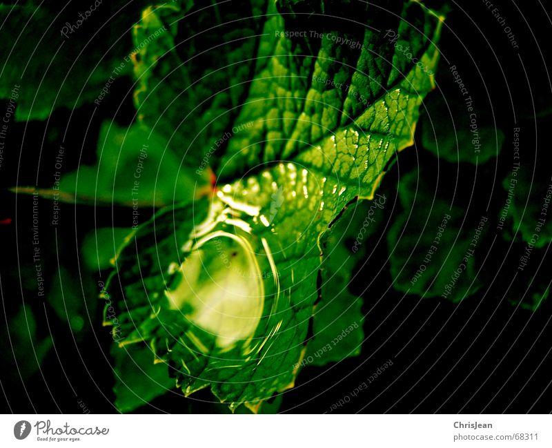Titellos schön Wellness Erholung ruhig Spiegel Zoo Natur Wasser Wassertropfen Urwald träumen nass grün beads water drip sheet sheets dream wet wetness badeteich