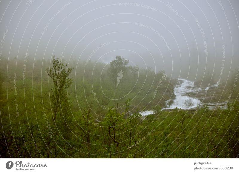 Norwegen Umwelt Natur Landschaft Pflanze Wasser Klima Wetter Nebel Wald Hügel Berge u. Gebirge Fluss Wasserfall dunkel kalt natürlich wild Stimmung Einsamkeit