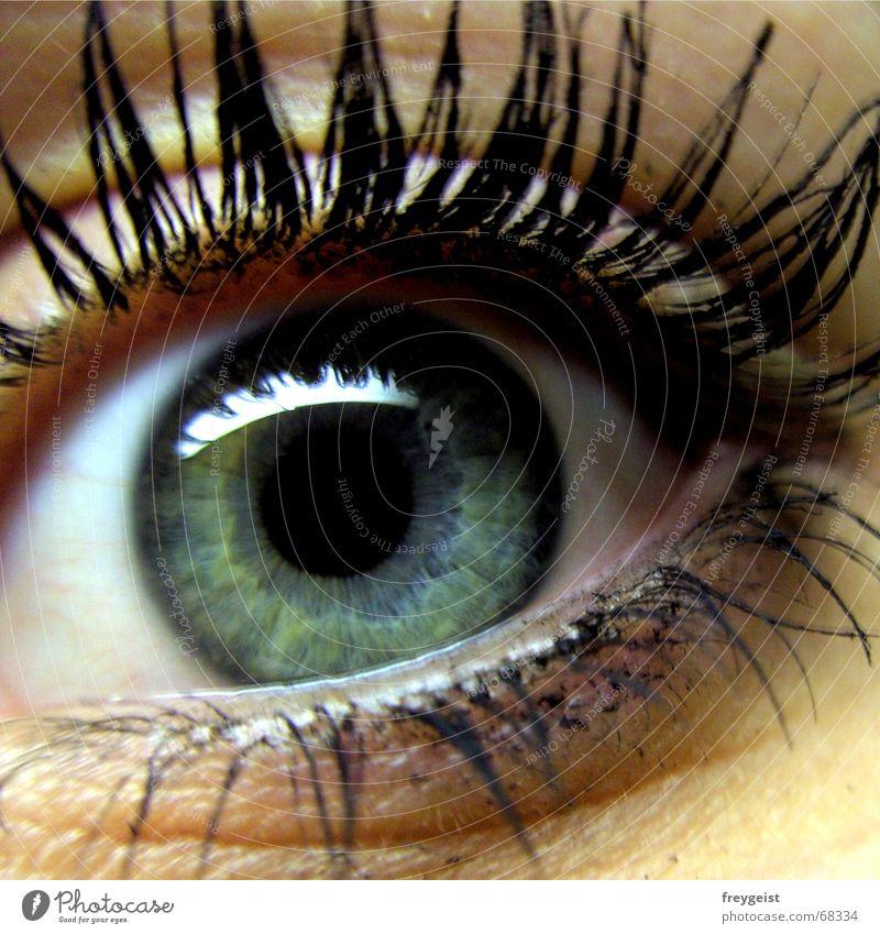 Beautiful Eye Stil schön Gesicht Wimperntusche Mensch Auge Erde See Tor glänzend träumen blau grau grün schwarz Gefühle Farbe Aufschlag Tusche eye