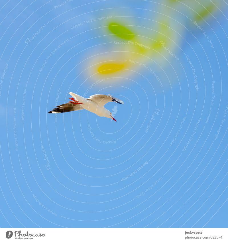 incorporated daub Wolkenloser Himmel Australien Möwe 1 Tier einfach Wärme blau grün Glück Lebensfreude Willensstärke Freiheit Gelassenheit Leichtigkeit