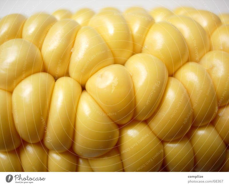 space-design organisch gelb glänzend Maiskolben Kolben Maisfeld Feld Küche Vitamin Restaurant fein sprudelnd rein ökologisch Ernährung Lebensmittel Zutaten