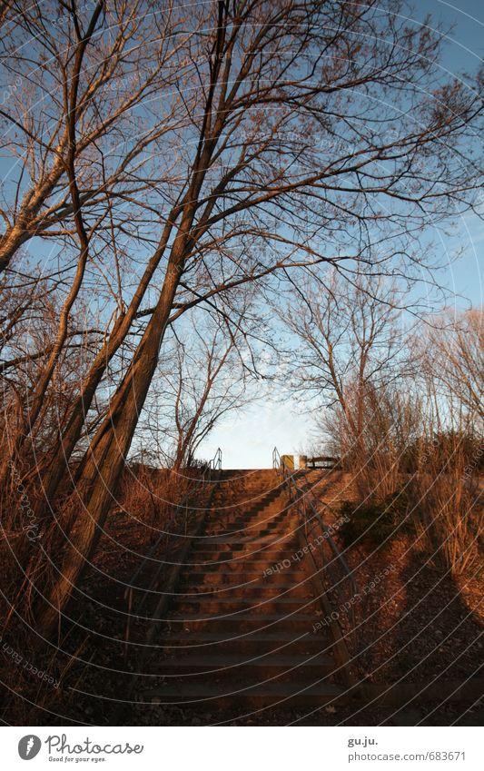 Schatten Licht Himmel Treppe Handlauf Baum Ast Natur Pflanze Erholung Landschaft Winter Berge u. Gebirge Umwelt Leben Horizont Park Erde Sträucher Erfolg