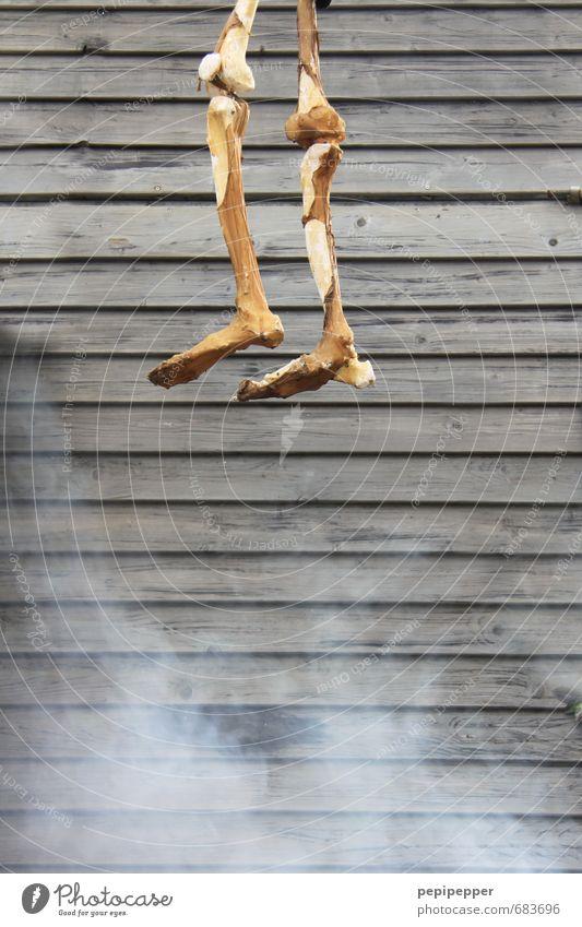 gut abgehangen Skelett Beine Fuß 1 Mensch 60 und älter Senior Hütte Ruine Mauer Wand Fassade Diät alt hängen dehydrieren Ekel gruselig Krankheit dünn Trauer Tod