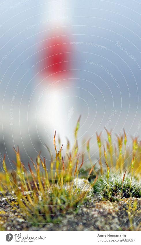 Leuchtturm Ferien & Urlaub & Reisen Strand Meer Insel Umwelt Natur Landschaft Klima Pflanze Moos Küste Fjord Nordsee Ostsee Fischerdorf Erholung grün rot weiß