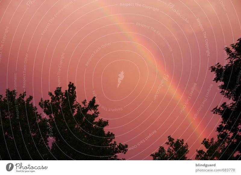 Rainbow in the dark Himmel blau grün Pflanze Sommer Baum rot Wolken Blatt schwarz gelb außergewöhnlich Garten Luft Park Wetter