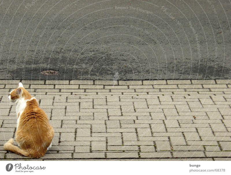 sedens, exspectans, desiderans Katze Haustier Fell Langeweile trist ruhig Blick Erholung Bürgersteig Asphalt Regenrinne Gully Teer leer Trauer Verkehrswege