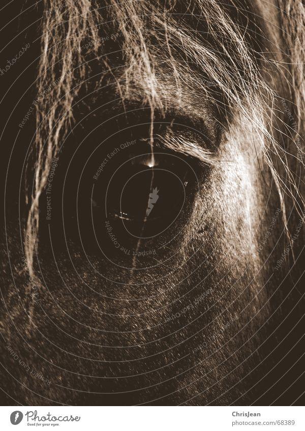 VonIrgendjemandTraum träumen Pferd Mähne extrem schlafen Tier bearbeitet Wunschtraum falsch Pferdeauge dream Haare & Frisuren Auge spieglung schtten Farbe