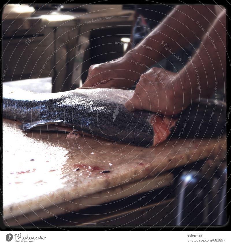tranchieren Lebensmittel Fisch Lachs Ernährung Lifestyle Küche Koch verkaufen frisch Teilung aufschneiden Messer ausnehmen kochen & garen Essen Blut