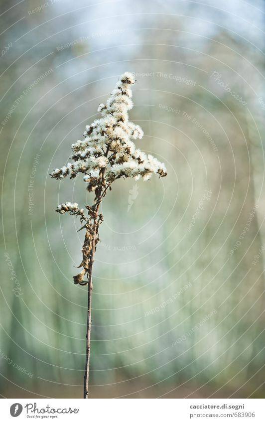 Alleine Natur blau grün Pflanze Einsamkeit Wald Herbst grau Schönes Wetter einfach Vergänglichkeit Freundlichkeit trocken dünn Gelassenheit Verfall