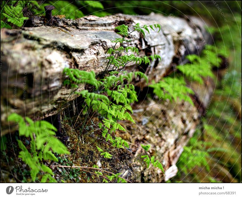 Moos und Farn alt grün Holz Erde nah verfallen Echte Farne morsch erdig