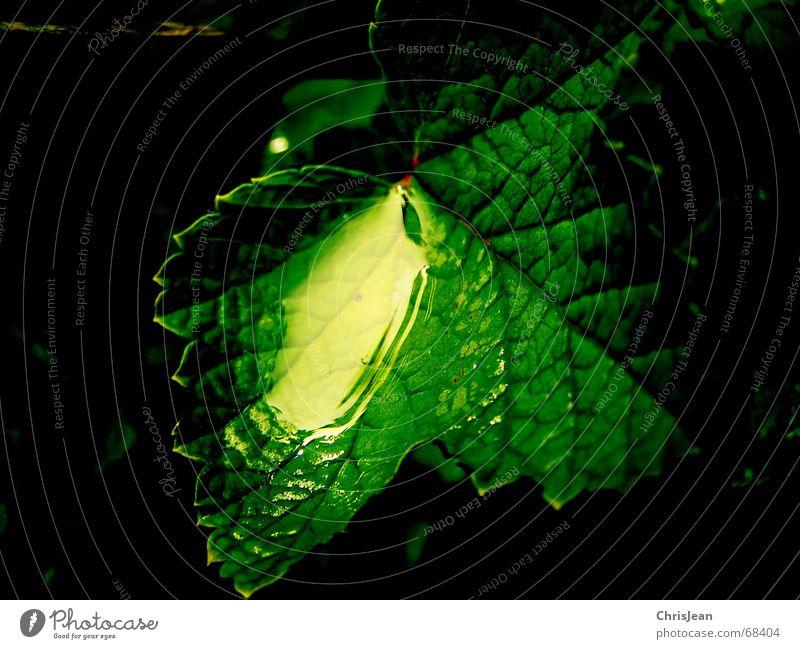 Titellos Natur schön grün Wasser Erholung Blatt ruhig träumen Wassertropfen nass Wellness Im Wasser treiben Spiegel Urwald Zoo