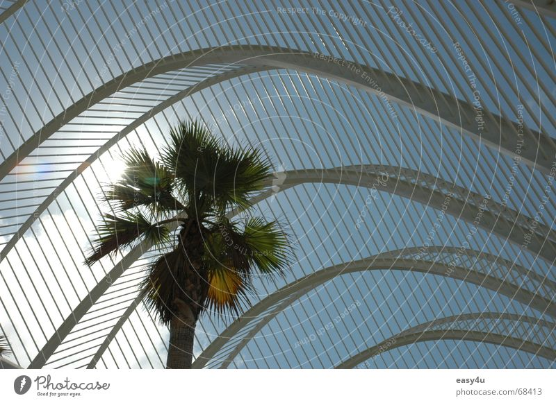 Underpalm Himmel Sonne Sommer träumen Metall Palme Architekt