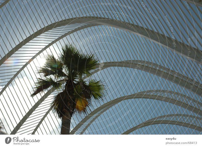 Underpalm Palme Sommer träumen Außenaufnahme alicante Architekt Sonne Himmel Metall