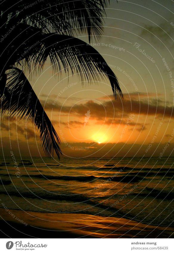 A new day begins Wasser Sonne Meer Blatt Wolken Erholung Wasserfahrzeug Wellen Treppe liegen Palme Abenddämmerung