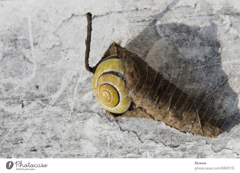 doppelt gewickelt Natur Blatt Garten Tier Schnecke 1 Verpackung Ornament Erholung liegen schlafen außergewöhnlich gruselig klein trocken verrückt braun grau
