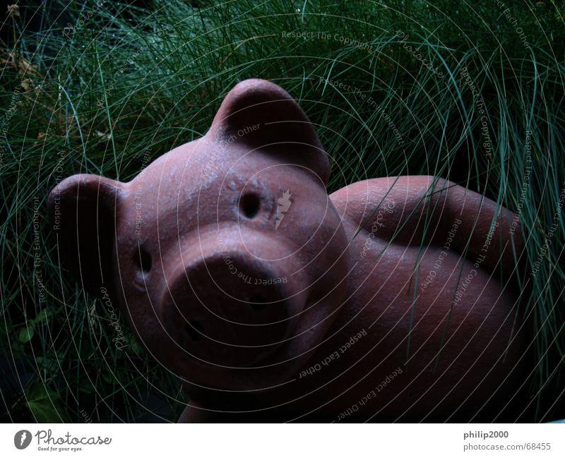 Die Inneren Werte zählen... Schwein Gras Erholung Porträt innere werte ne wat süss