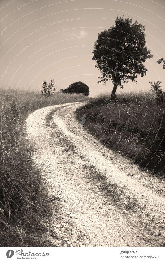 aus[WEG]los Natur Baum Landschaft grau Gras Wege & Pfade Horizont Feld Skyline Richtung Kies Bilderbuch