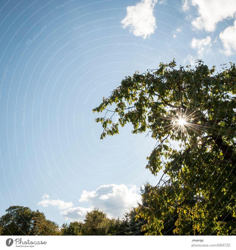 Strahlen Umwelt Natur Landschaft Himmel Wolken Sonne Sonnenlicht Sommer Klima Wetter Schönes Wetter Baum Park leuchten einfach schön Stimmung Lebensfreude
