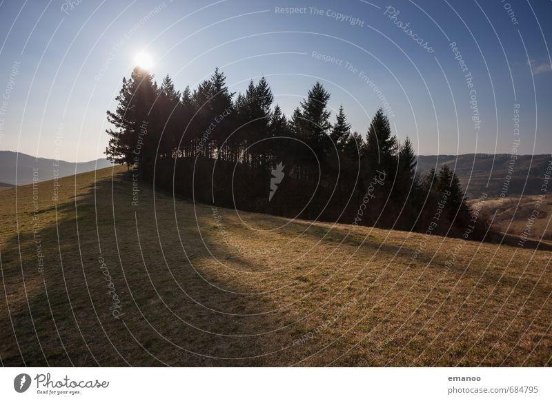 Das Wäldchen auf dem Kaiserstuhl Ferien & Urlaub & Reisen Tourismus Ausflug Berge u. Gebirge wandern Natur Landschaft Pflanze Himmel Sonne Klima Wetter