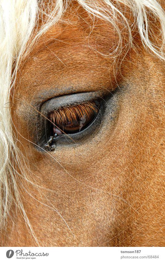 mensch im tier Auge Pferd Tier Momentaufnahme Mähne