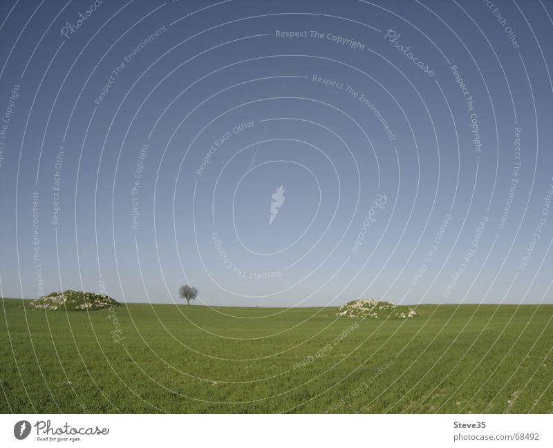 Baum Natur ruhig Einsamkeit Ferne Frühling Stein Feld Horizont trist Getreide Spanien