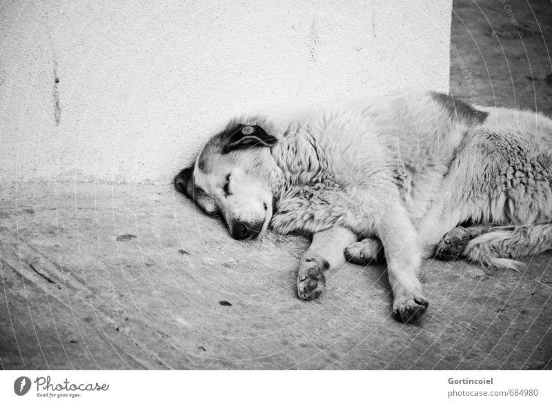 Schlaf Stadt Mauer Wand Straße Tier Hund Tiergesicht Fell Pfote 1 Gefühle Schmerz Sehnsucht Straßenhund Herumtreiben schlafen Appetit & Hunger Müdigkeit