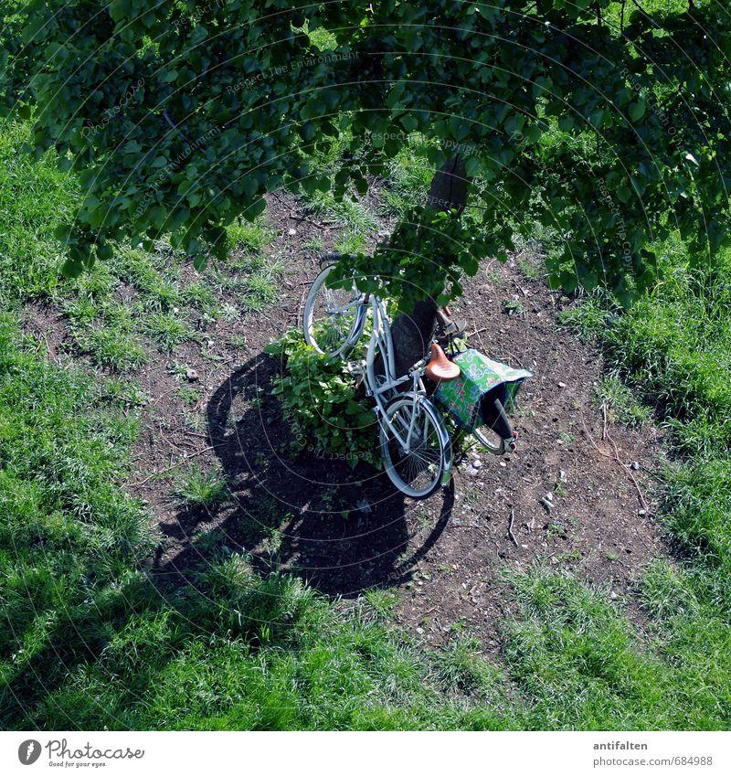 Fahrradtour | Wetter Freizeit & Hobby Fahrradfahren Ferien & Urlaub & Reisen Tourismus Ausflug Sport Natur Tier Frühling Sommer Schönes Wetter Baum Gras Moos