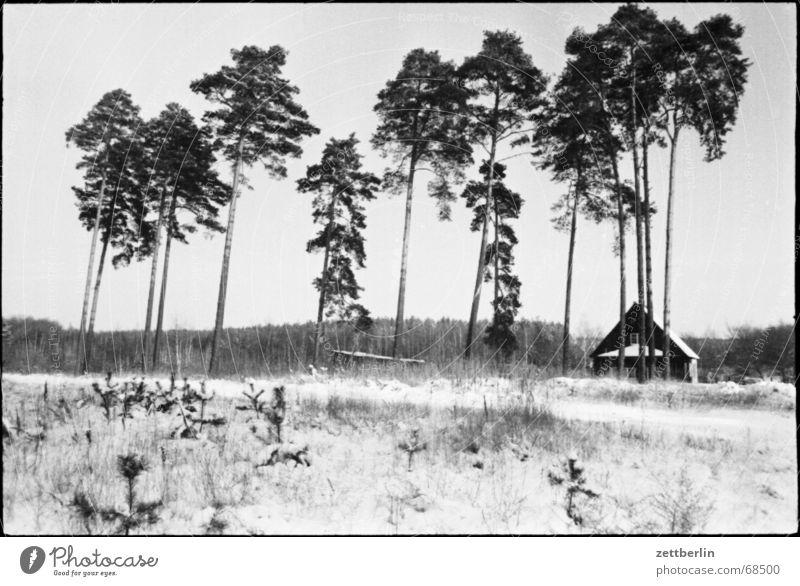 Winter Schneedecke Wald Waldrand Oberkiefer Unterkiefer Haus Dorf Brandenburg Wiese Gras kalt Eis Kanada Fallensteller Ödland Einsamkeit Jäger Neuanfang