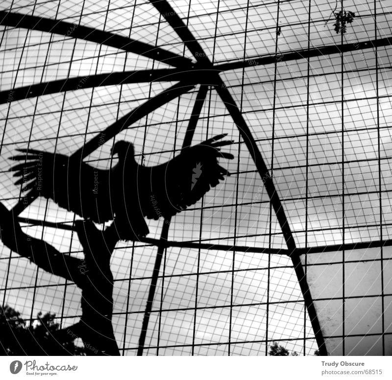 the trapeze swinger Tier Vogel Zoo Gitter gefangen Deutschland Gehege Haftstrafe Käfig Sachsen Dresden Revier Tiergarten Zwinger