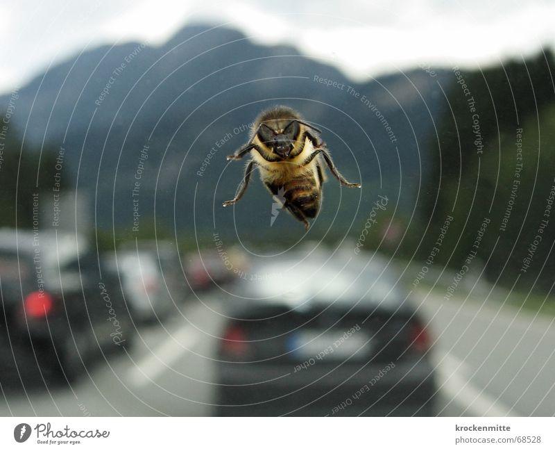 Geisterflieger Biene Autobahn Verkehrsstau Windschutzscheibe Geisterfahrer Insekt PKW Berge u. Gebirge fliegen Fensterscheibe ferienverkehr