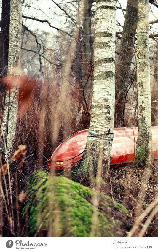 Überwinterung Ferien & Urlaub & Reisen Ausflug Sport Wassersport Kanu Wasserfahrzeug Umwelt Natur Landschaft Herbst Winter Pflanze Baum Sträucher Moos Birke
