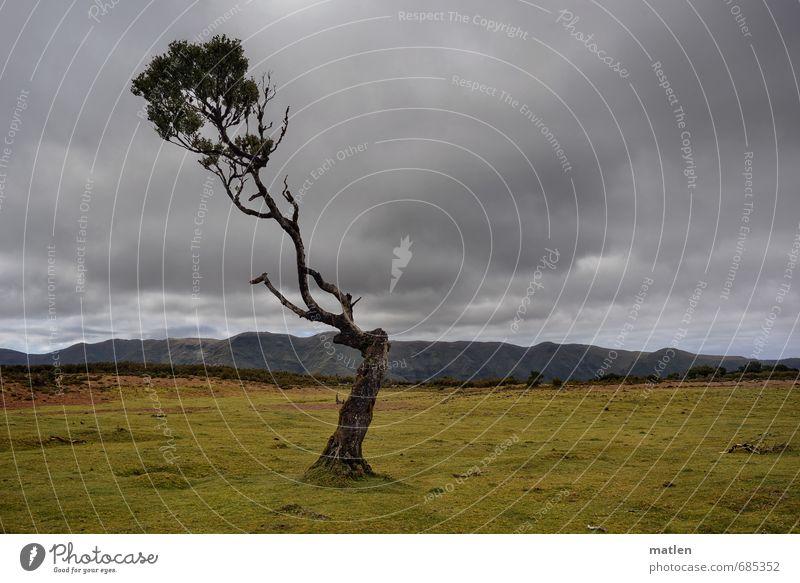 selfie Natur Landschaft Pflanze Himmel Wolken Gewitterwolken Horizont Frühling Wetter schlechtes Wetter Baum Gras Hügel Berge u. Gebirge Gipfel braun grau grün