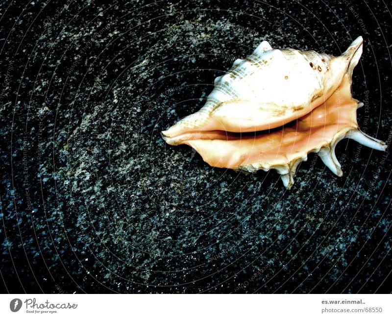 meeresschatz. Schalen & Schüsseln Ferien & Urlaub & Reisen Meer Haus Traumhaus Wasser Muschel 1 Tier Kasten Souvenir hören dunkel groß braun schwarz Fernweh