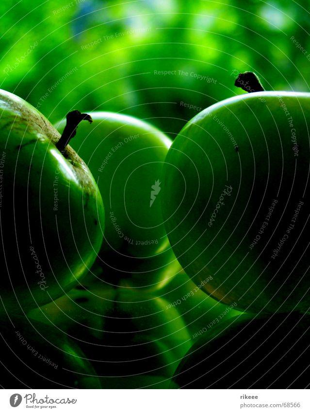 green day... grün Pflanze Umwelt Apfelbaum Reflexion & Spiegelung Natur Frucht Gemüse Garten