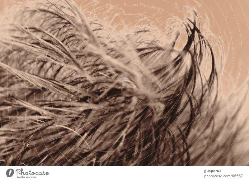 { cut'n go! } Haare & Frisuren rein Friseur geschnitten verschönern unnatürlich verfälscht