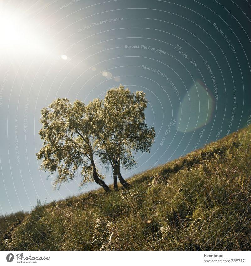 Gefällige Birken. Ferien & Urlaub & Reisen Sommer wandern Umwelt Natur Landschaft Tier Himmel Horizont Schönes Wetter Baum Gras Wiese Hügel Linie Wachstum blau