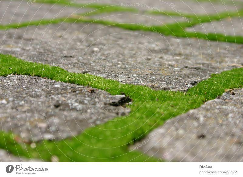 grüne Wege (1) pflastern Furche bewachsen frisch Rechteck Sommer Natur Kopfsteinpflaster Bauernhof moss cobblestone cobbled chink overgrown fresh Moos