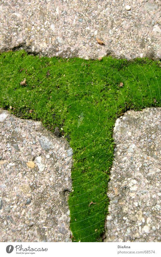 vorne links abbiegen Natur grün Sommer frisch Bauernhof Kopfsteinpflaster Moos Furche Rechteck bewachsen pflastern