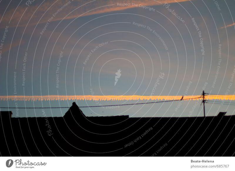 Natur-Deko Sommer Umwelt Tier Himmel Sonnenaufgang Sonnenuntergang Kleinstadt Stadtzentrum Skyline Dach Vogel Dekoration & Verzierung leuchten außergewöhnlich