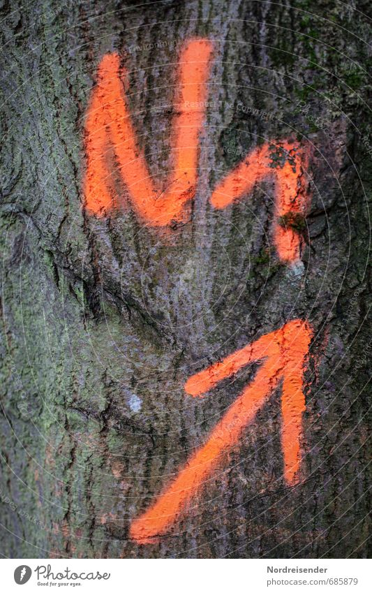 ....und hoch.... Baum Farbstoff orange Schilder & Markierungen Erfolg Schriftzeichen Ziffern & Zahlen Zeichen Landwirtschaft Pfeil aufwärts Forstwirtschaft